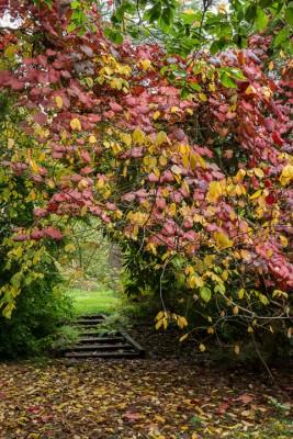 wpid14652-WoodBarton-Garden-in-November-GWOA013-nicola-stocken.jpg