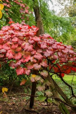 wpid14654-WoodBarton-Garden-in-November-GWOA014-nicola-stocken.jpg