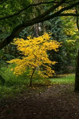 wpid14656-WoodBarton-Garden-in-November-GWOA015-nicola-stocken.jpg