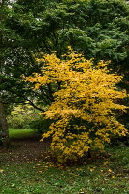 wpid14658-WoodBarton-Garden-in-November-GWOA016-nicola-stocken.jpg