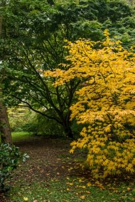wpid14660-WoodBarton-Garden-in-November-GWOA017-nicola-stocken.jpg