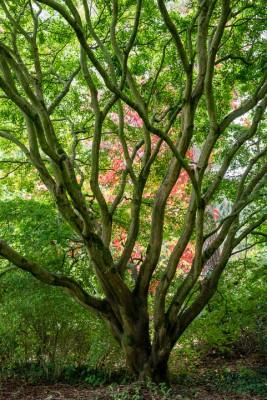 wpid14662-WoodBarton-Garden-in-November-GWOA018-nicola-stocken.jpg