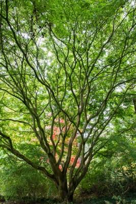 wpid14664-WoodBarton-Garden-in-November-GWOA019-nicola-stocken.jpg
