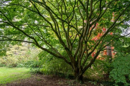 wpid14666-WoodBarton-Garden-in-November-GWOA020-nicola-stocken.jpg
