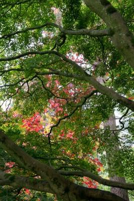 wpid14668-WoodBarton-Garden-in-November-GWOA021-nicola-stocken.jpg
