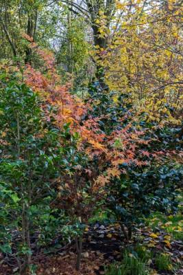 wpid14670-WoodBarton-Garden-in-November-GWOA022-nicola-stocken.jpg
