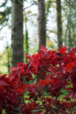 wpid14672-WoodBarton-Garden-in-November-GWOA023-nicola-stocken.jpg