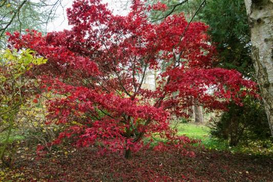 wpid14674-WoodBarton-Garden-in-November-GWOA024-nicola-stocken.jpg