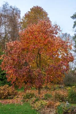 wpid14676-WoodBarton-Garden-in-November-GWOA025-nicola-stocken.jpg