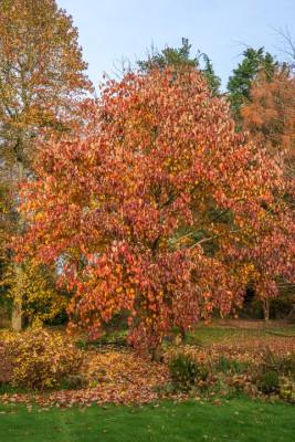 wpid14678-WoodBarton-Garden-in-November-GWOA026-nicola-stocken.jpg