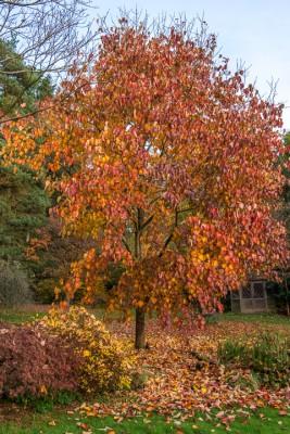 wpid14680-WoodBarton-Garden-in-November-GWOA027-nicola-stocken.jpg