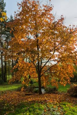 wpid14684-WoodBarton-Garden-in-November-GWOA029-nicola-stocken.jpg