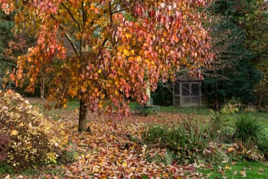 wpid14686-WoodBarton-Garden-in-November-GWOA030-nicola-stocken.jpg