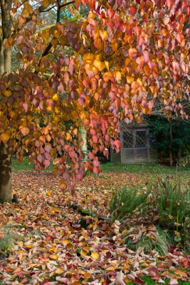 wpid14688-WoodBarton-Garden-in-November-GWOA031-nicola-stocken.jpg