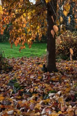 wpid14690-WoodBarton-Garden-in-November-GWOA032-nicola-stocken.jpg