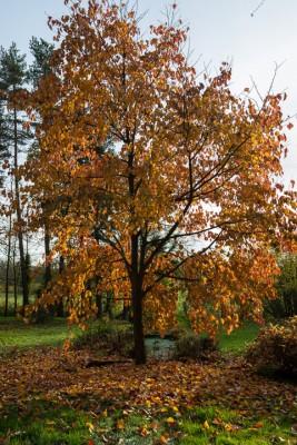 wpid14692-WoodBarton-Garden-in-November-GWOA033-nicola-stocken.jpg