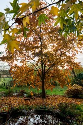 wpid14694-WoodBarton-Garden-in-November-GWOA034-nicola-stocken.jpg