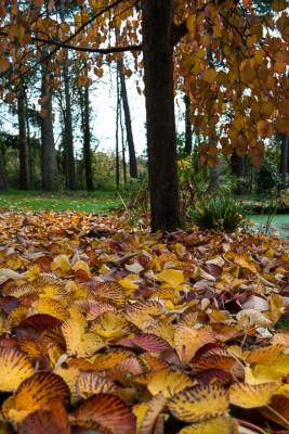 wpid14696-WoodBarton-Garden-in-November-GWOA035-nicola-stocken.jpg