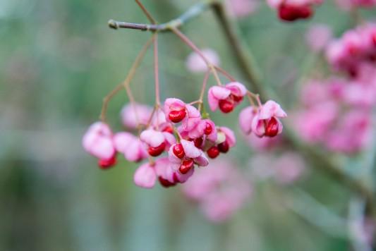 wpid14698-WoodBarton-Garden-in-November-SEUO012-nicola-stocken.jpg