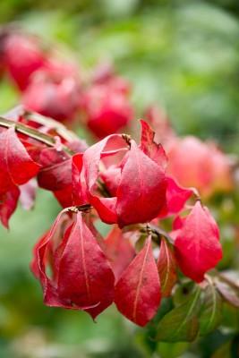 wpid14700-WoodBarton-Garden-in-November-SEUO013-nicola-stocken.jpg