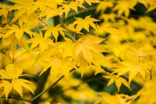 wpid14704-WoodBarton-Garden-in-November-TACE082-nicola-stocken.jpg