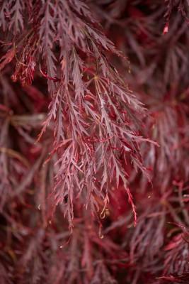 wpid14706-WoodBarton-Garden-in-November-TACE083-nicola-stocken.jpg