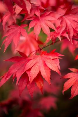 wpid14708-WoodBarton-Garden-in-November-TACE084-nicola-stocken.jpg