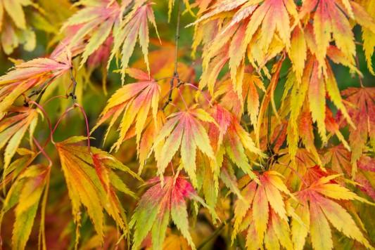 wpid14712-WoodBarton-Garden-in-November-TACE086-nicola-stocken.jpg