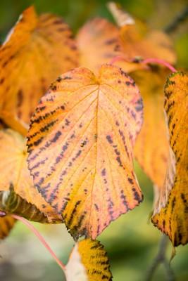 wpid14714-WoodBarton-Garden-in-November-TDAV001-nicola-stocken.jpg