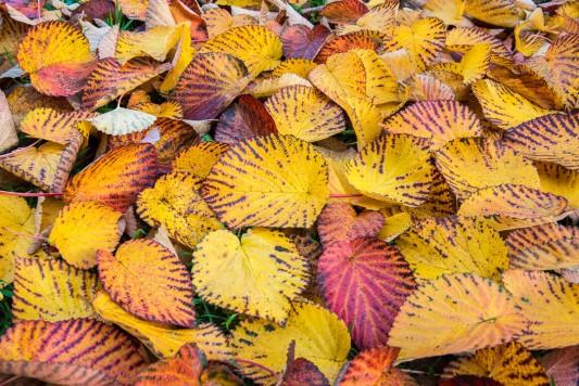 wpid14716-WoodBarton-Garden-in-November-TDAV002-nicola-stocken.jpg