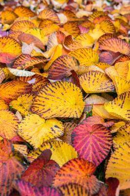 wpid14718-WoodBarton-Garden-in-November-TDAV003-nicola-stocken.jpg