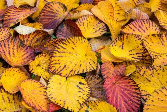 wpid14720-WoodBarton-Garden-in-November-TDAV004-nicola-stocken.jpg