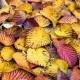 wpid14722-WoodBarton-Garden-in-November-TDAV005-nicola-stocken.jpg thumbnail