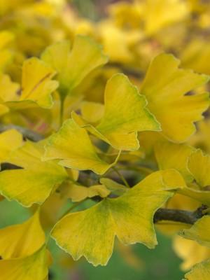 wpid14724-WoodBarton-Garden-in-November-TGIN001-nicola-stocken.jpg