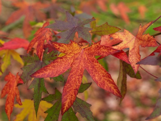 wpid14726-WoodBarton-Garden-in-November-TLIQ002-nicola-stocken.jpg