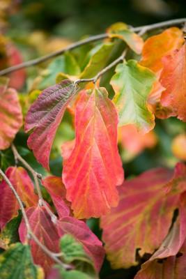 wpid14728-WoodBarton-Garden-in-November-TPAR002-nicola-stocken.jpg