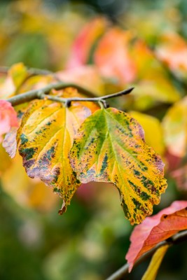 wpid14730-WoodBarton-Garden-in-November-TPAR003-nicola-stocken.jpg