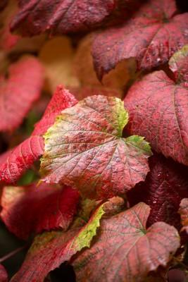 wpid14734-WoodBarton-Garden-in-November-CVIT012-nicola-stocken.jpg