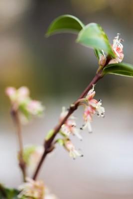 wpid14740-Picking-a-Garden-Posie-in-January-QPOS033-nicola-stocken.jpg