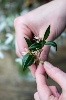 wpid14742-Picking-a-Garden-Posie-in-January-QPOS006-nicola-stocken.jpg