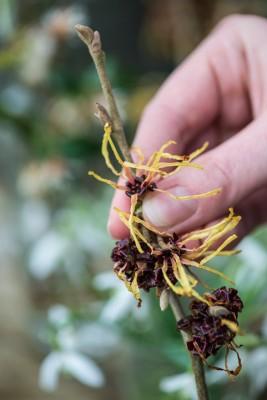 wpid14744-Picking-a-Garden-Posie-in-January-QPOS001-nicola-stocken.jpg