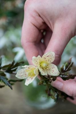 wpid14746-Picking-a-Garden-Posie-in-January-QPOS002-nicola-stocken.jpg