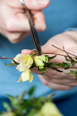 wpid14760-Picking-a-Garden-Posie-in-January-QPOS008-nicola-stocken.jpg