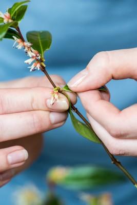 wpid14762-Picking-a-Garden-Posie-in-January-QPOS009-nicola-stocken.jpg