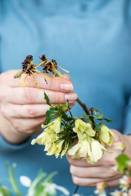 wpid14770-Picking-a-Garden-Posie-in-January-QPOS013-nicola-stocken.jpg