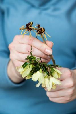 wpid14772-Picking-a-Garden-Posie-in-January-QPOS014-nicola-stocken.jpg