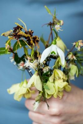 wpid14784-Picking-a-Garden-Posie-in-January-QPOS020-nicola-stocken.jpg