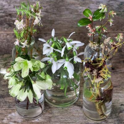 wpid14790-Picking-a-Garden-Posie-in-January-QPOS026-nicola-stocken.jpg