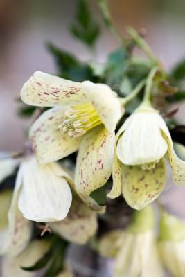 wpid14796-Picking-a-Garden-Posie-in-January-QPOS029-nicola-stocken.jpg