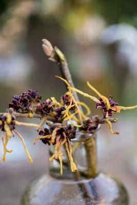 wpid14798-Picking-a-Garden-Posie-in-January-QPOS030-nicola-stocken.jpg